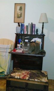 Tabby cat on writer's desk